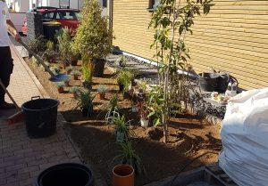 bepflanzung-vorgarten_1